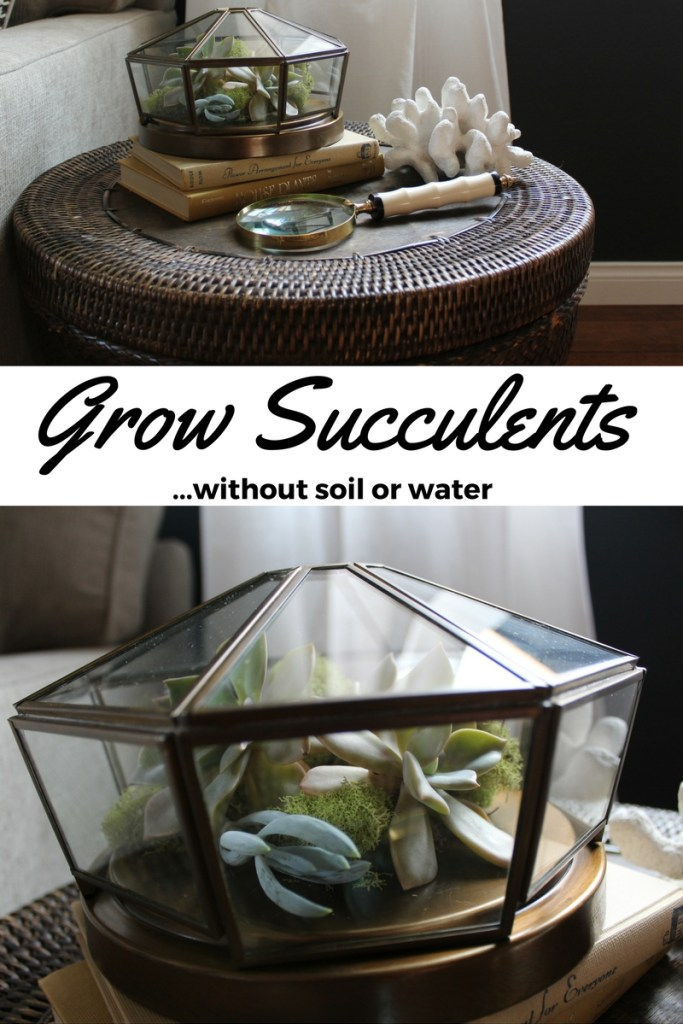 Grow succulents without soil or water