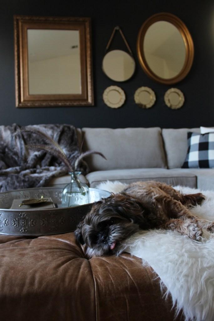 shitzu lounging on a fur throw
