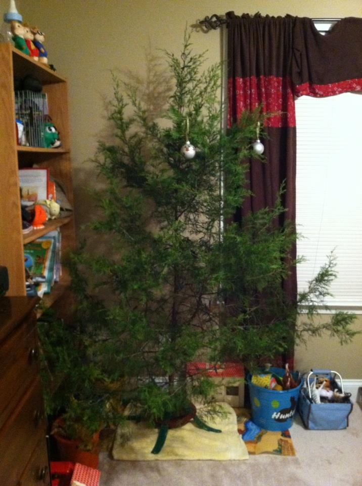 Christmas Traditions - cut your own tree - Charlie Brown Christmas Tree