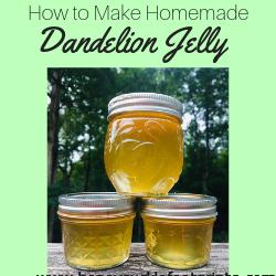 Dandelion, Jelly, Jam, unusual, Healthy, homegrown