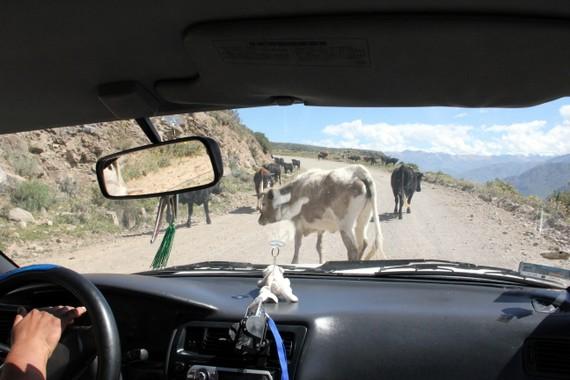 Colca Canyon Travel