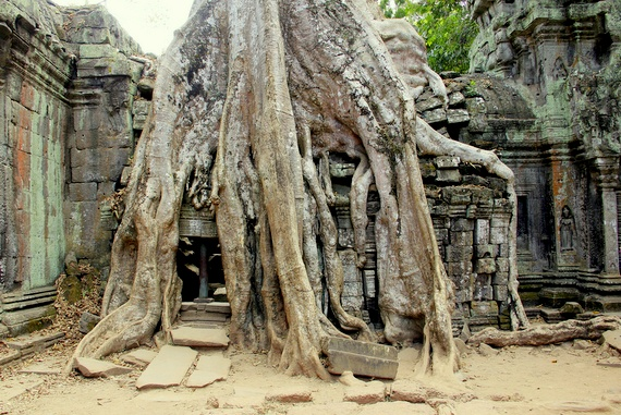 tree-covered temples