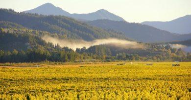 Refueling in Wine Country: Marlborough, New Zealand