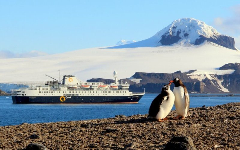 Penguins and Quark Expeditions