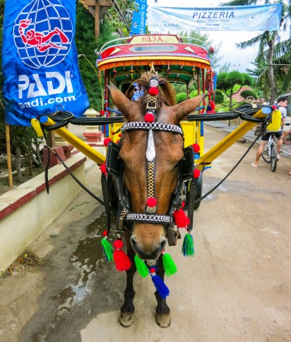 Horses with Lombok flair
