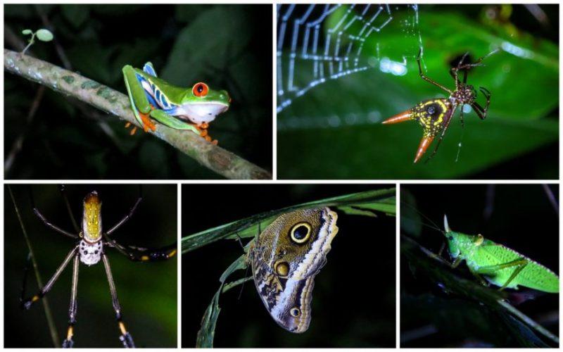 Night Walk - Tortuguero - HoneyTrek.com