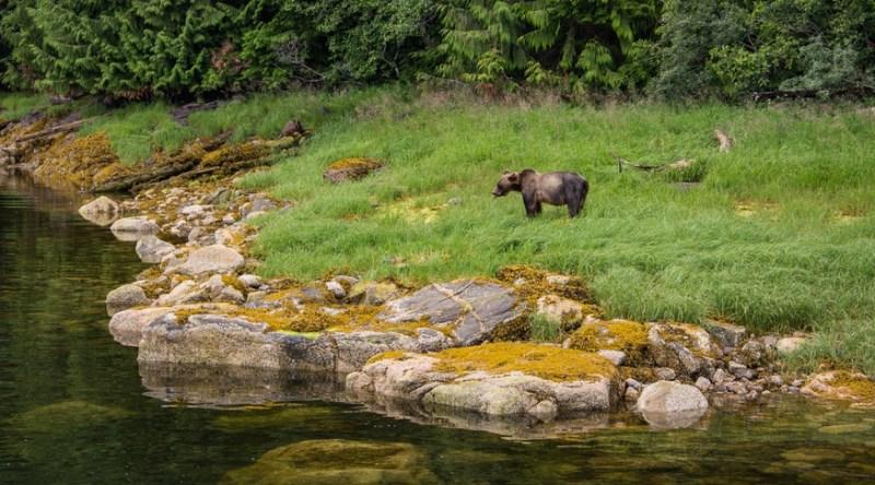 KHUTZYMATEEN bear sanctuary