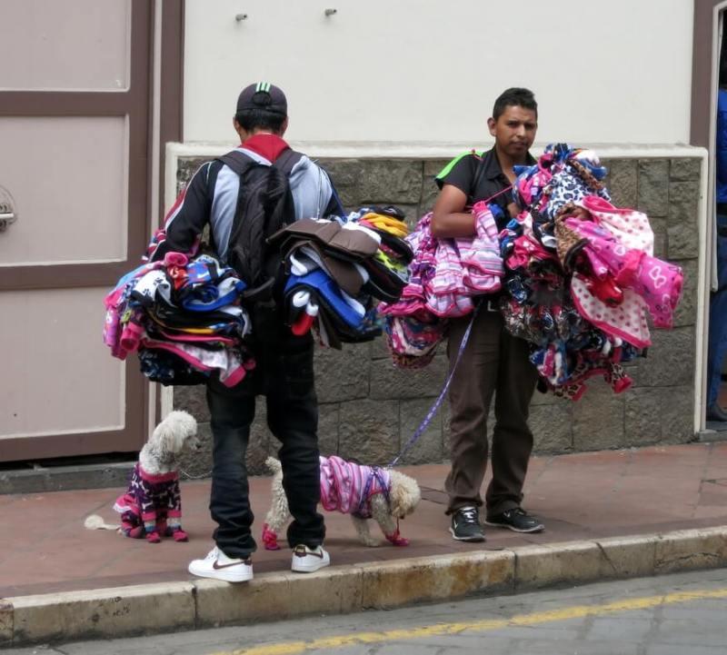 Cuenca dog costume vendors