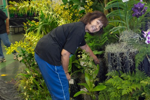 Charlotte Yamamoto straightens a plant in the display.