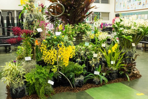 Besides winning the Best Display Trophy, the HOS display had plants that garnered 10 best in category trophies.