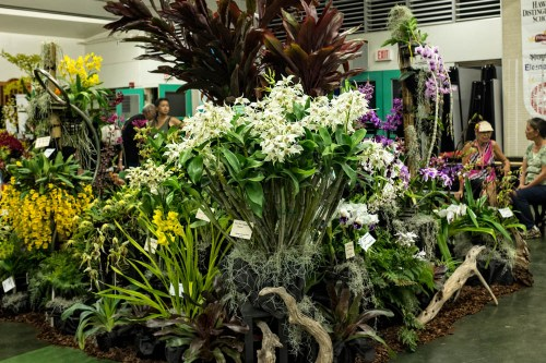 The HOS Display featured Dendrobium Paul Pacquette which won the Best in Show Trophy.  The plant is owned by George and Judy Hidano.  (Click on the image for a larger and higher resolution image.)