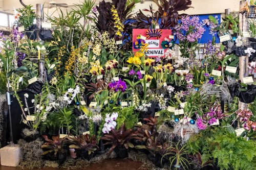 The HOS display was very colorful with a variety of plants.  Several plants won trophies for being the best in their categories.