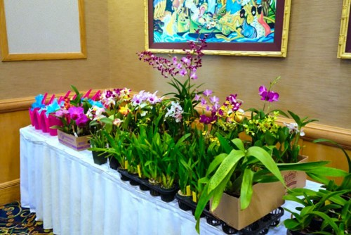 Some of the plants that were given away by lucky number draw.