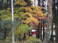 p_shikinoyama1111_07b
