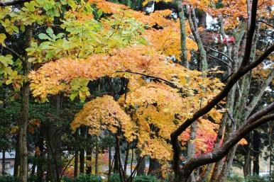 p_shikinoyama1411_06