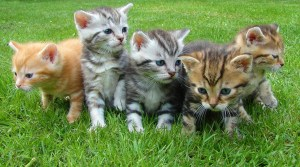 Oh my goodness, look how cute those kittens are! Screw you, Mike Pence!