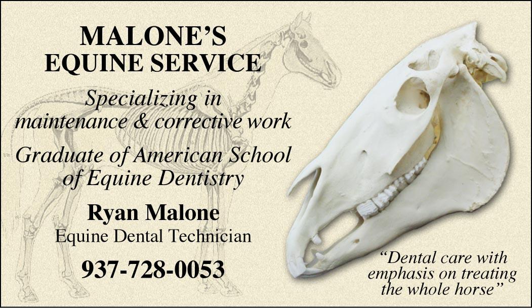 Custom Business Cards Horse AnatomySkull Design Www