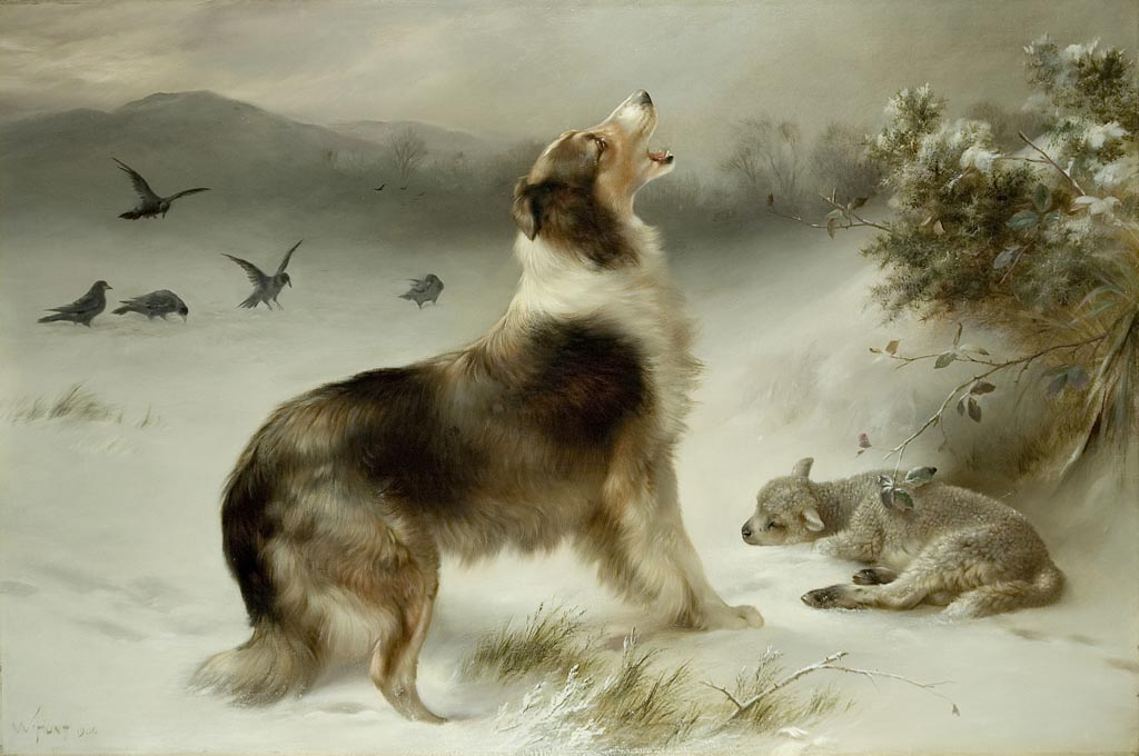 Found Collie And Lamb Print By Walter Hunt Www