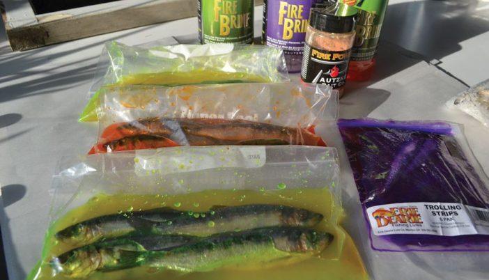 herring in brine 4