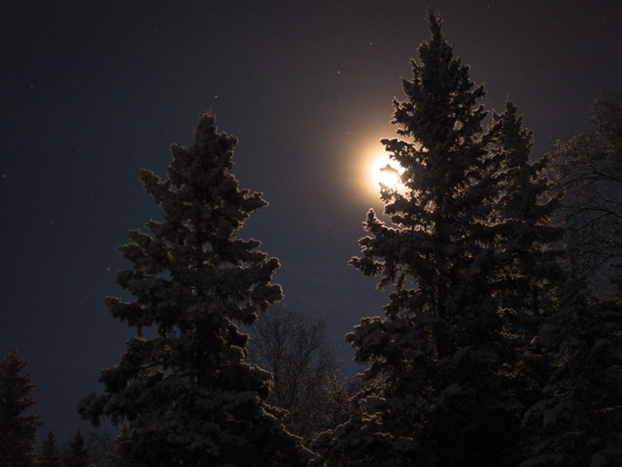 6 - Backlit Trees