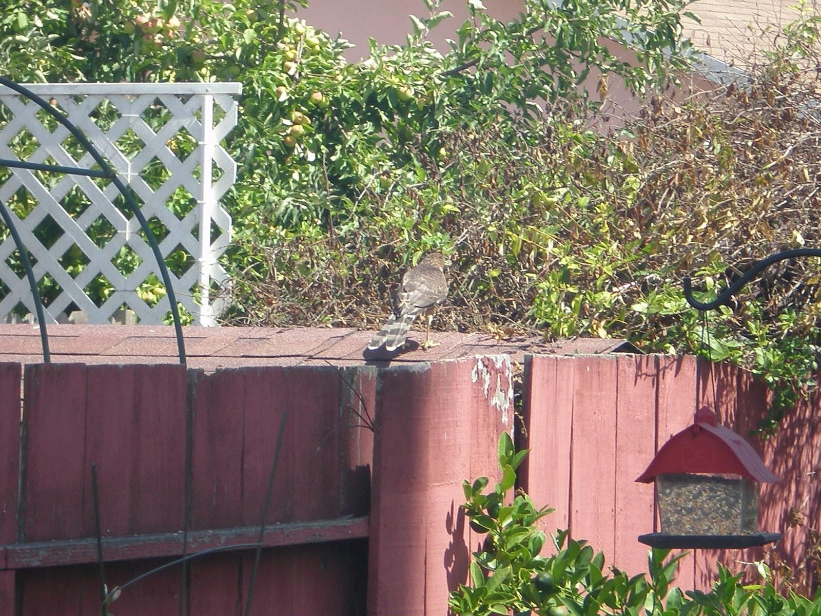 backyard birding hootido com