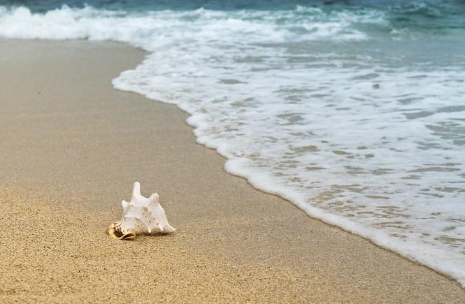 Muschel im Sand - Du bist wertvoll wie eine Muschel auch wenn du nur ein Stein bist