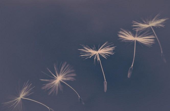 Was ist dein sehnlichster Wunsch - hope and shine