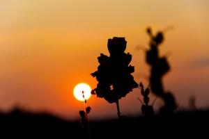 Der Schatten einer Blume zeigt sich im Sonnenaufgang - Hope and Shine - Urlaub im Ich