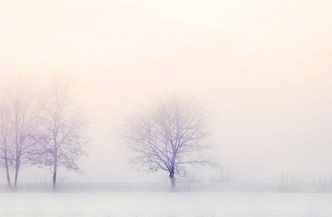 3 Bäume in der nebeligen Winterlandschaft erzählen über ein neues Gefühl
