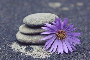 Dekorative Steine mit lila Gerbera - vom Glück neu anzufangen