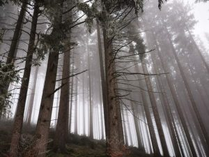 Bäume im Raureif - Ängste zulassen, Hoffnung schöpfen