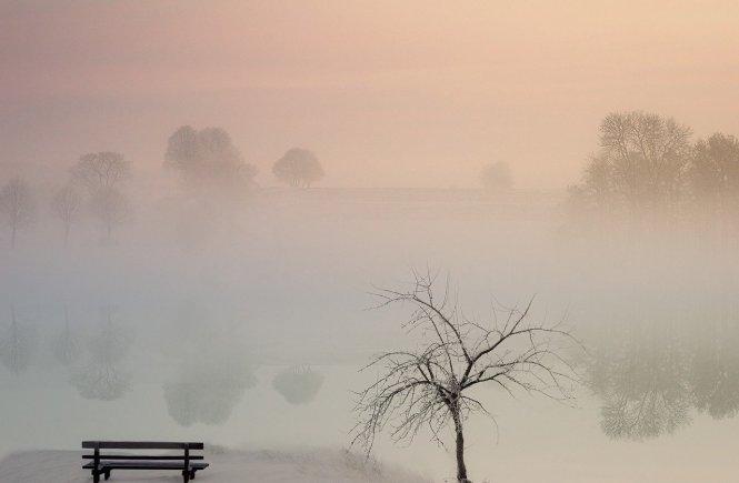 Baumreihe im Nebel des Nichts