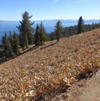 Tahoe Rim Trail–Day 8