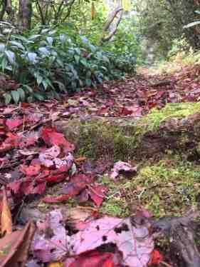 Leaves on trail