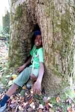 Wogene in tree