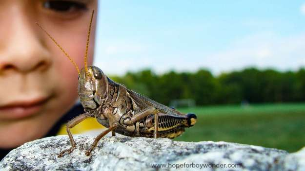 Boy Wonder looking at a grasshopper
