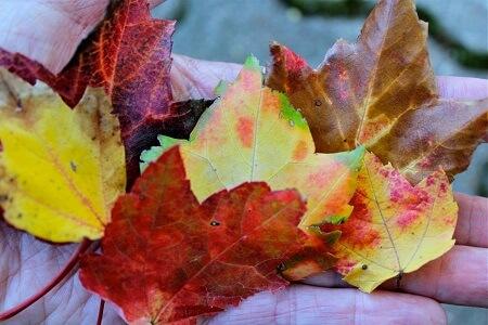 fall7-resized