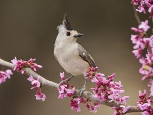 graybirdpinkflowersguidebook