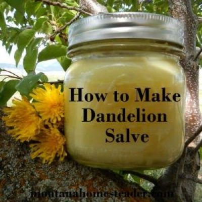 How to make a dandelion salve for aches and pains