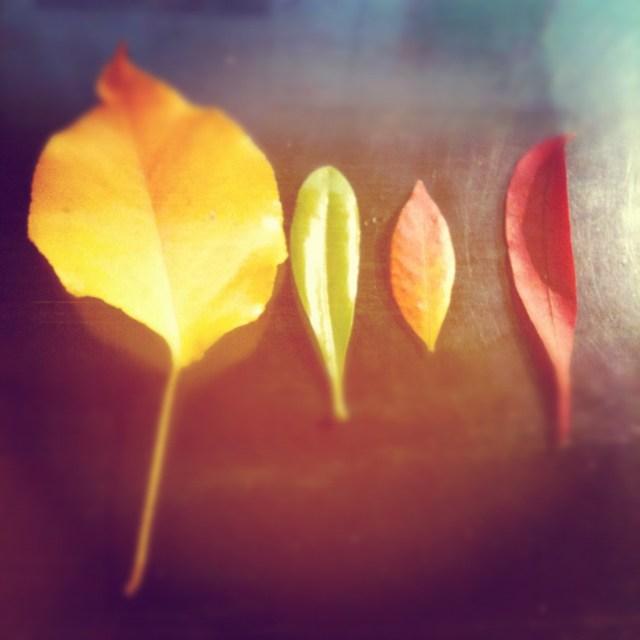 Rainbow Fall Leaves