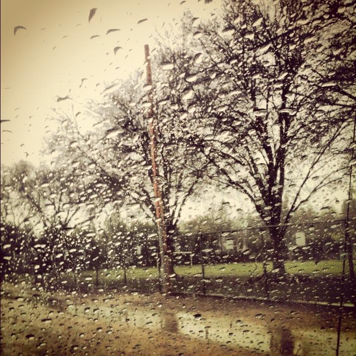 Rainy Day Trees Through Windshield