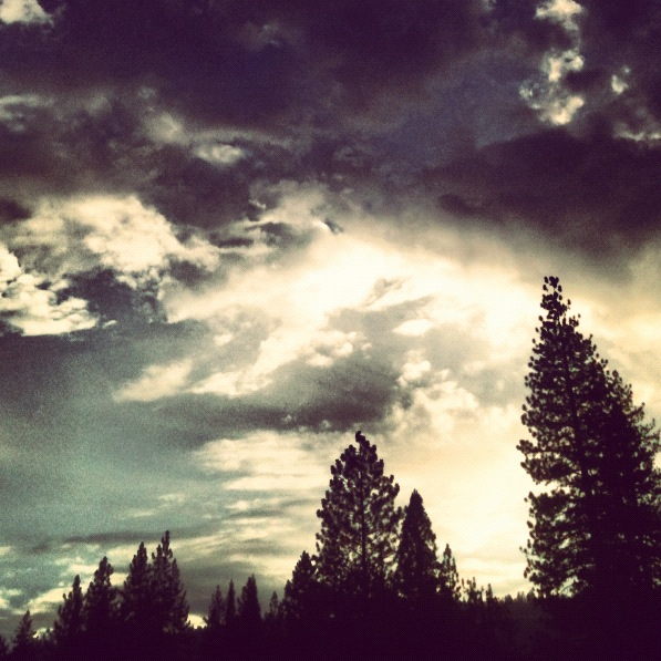 clouds and fir trees