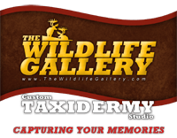 The Wildlife Gallery Taxidermy
