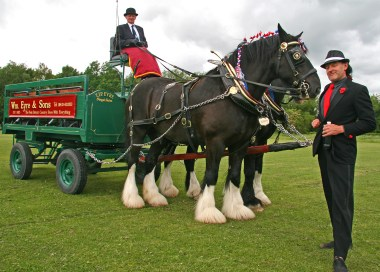 Tony with shire horses posing image-reduce