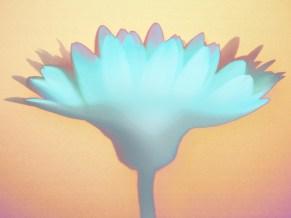 RKM_Floral-Crown