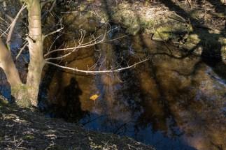 DAShadows&Reflections-4
