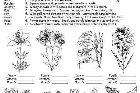 Flower structure quiz flowers near me flowers near me parts of a seed quiz worksheets plants and gardens parts of a flower diagram plants interactive notebook science craft activity parts of a plant and flower ccuart Choice Image