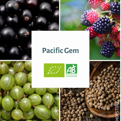 Houblon bio Pacific Gem