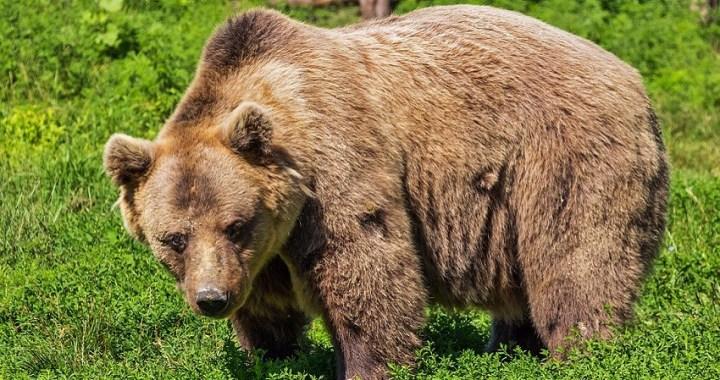 """Un niño de tres años afirma que fue """"protegido por un oso"""" durante dos noches en un bosque"""