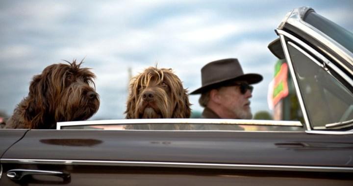 Cuatro consejos para viajar con mascotas en el coche